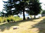 Martins Bluff Cemetery
