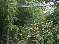 Tyner Cemetery
